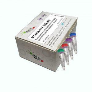 (MTHFR C677T Mutation Detection kit(RQ