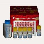 کیت الایزا تشخیص میزان سایتوکین IL-2 انسانی